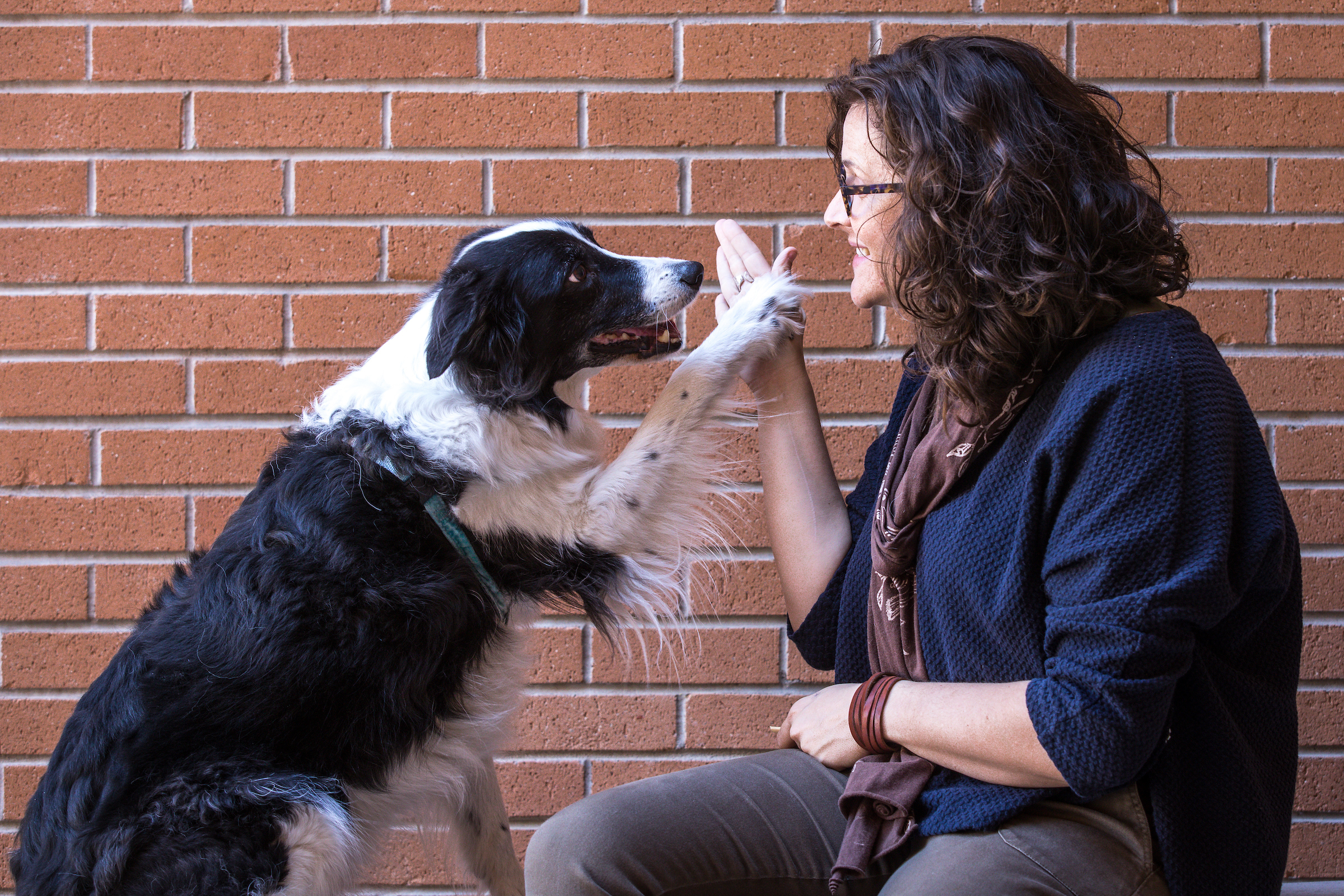 ASU researcher finds ways to reduce stress in shelter dogs | ASU Now:  Access, Excellence, Impact