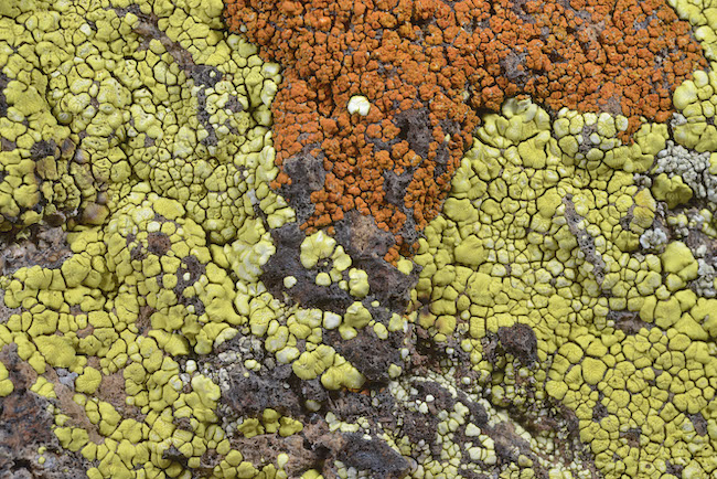 A life of lichen