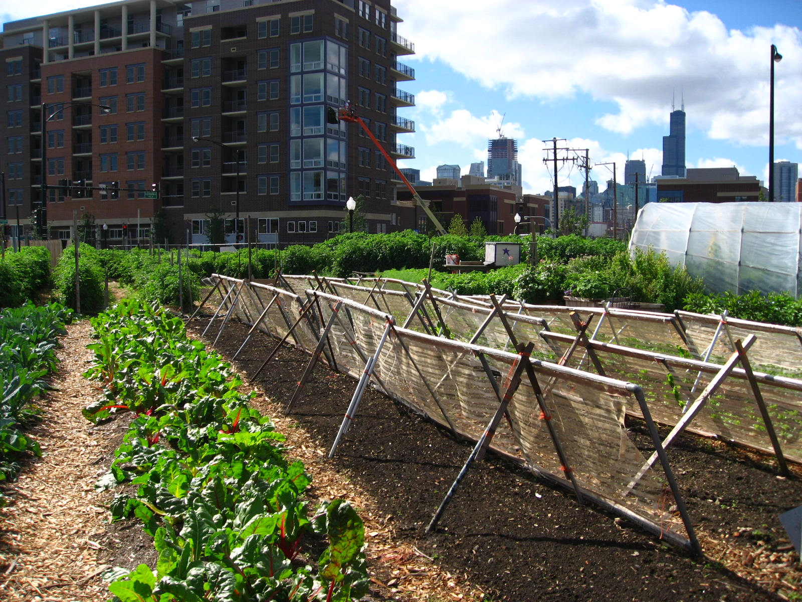 Harvesting data: The impacts of increased urban farming