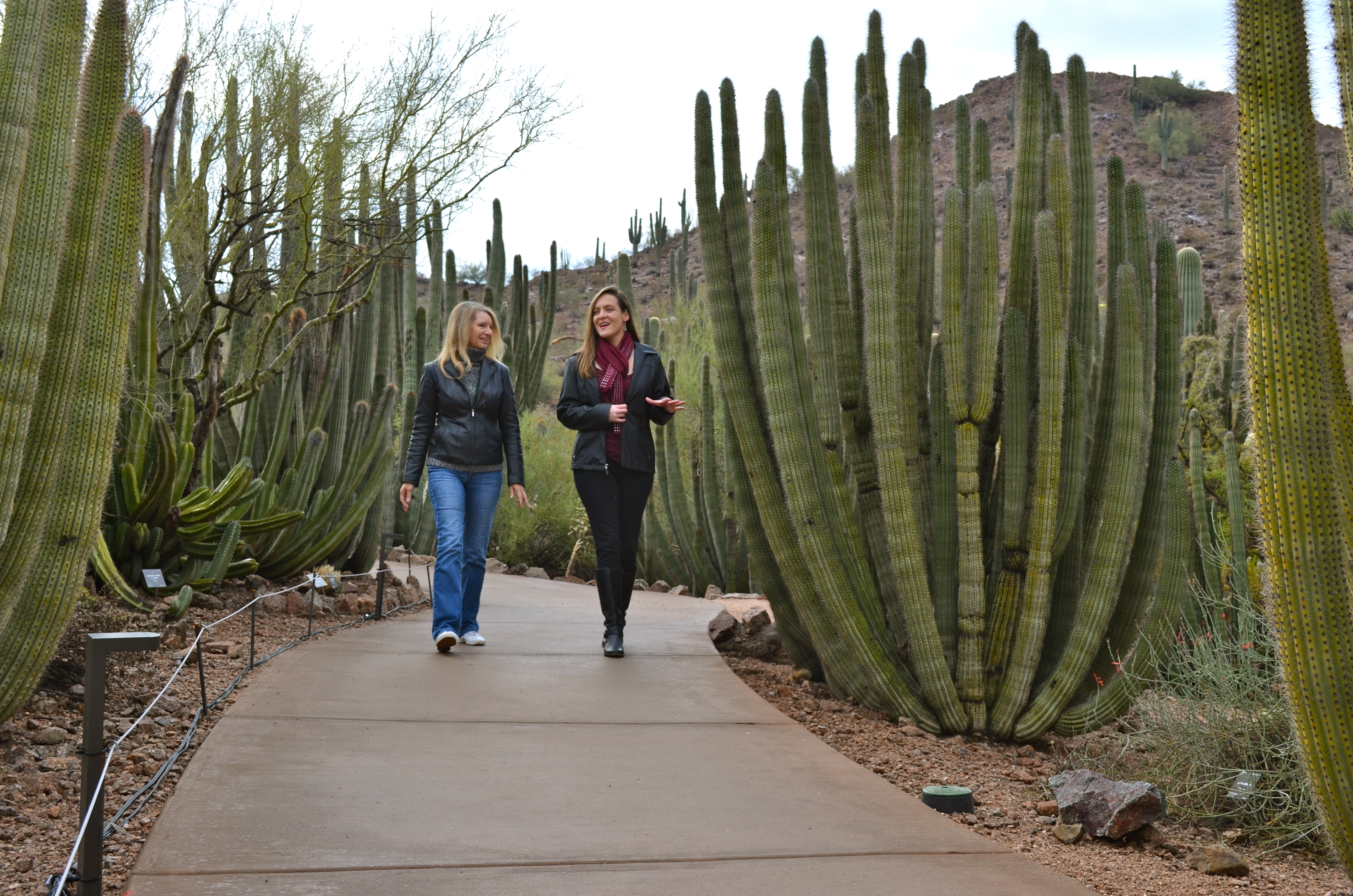 Desert Botanical Expand