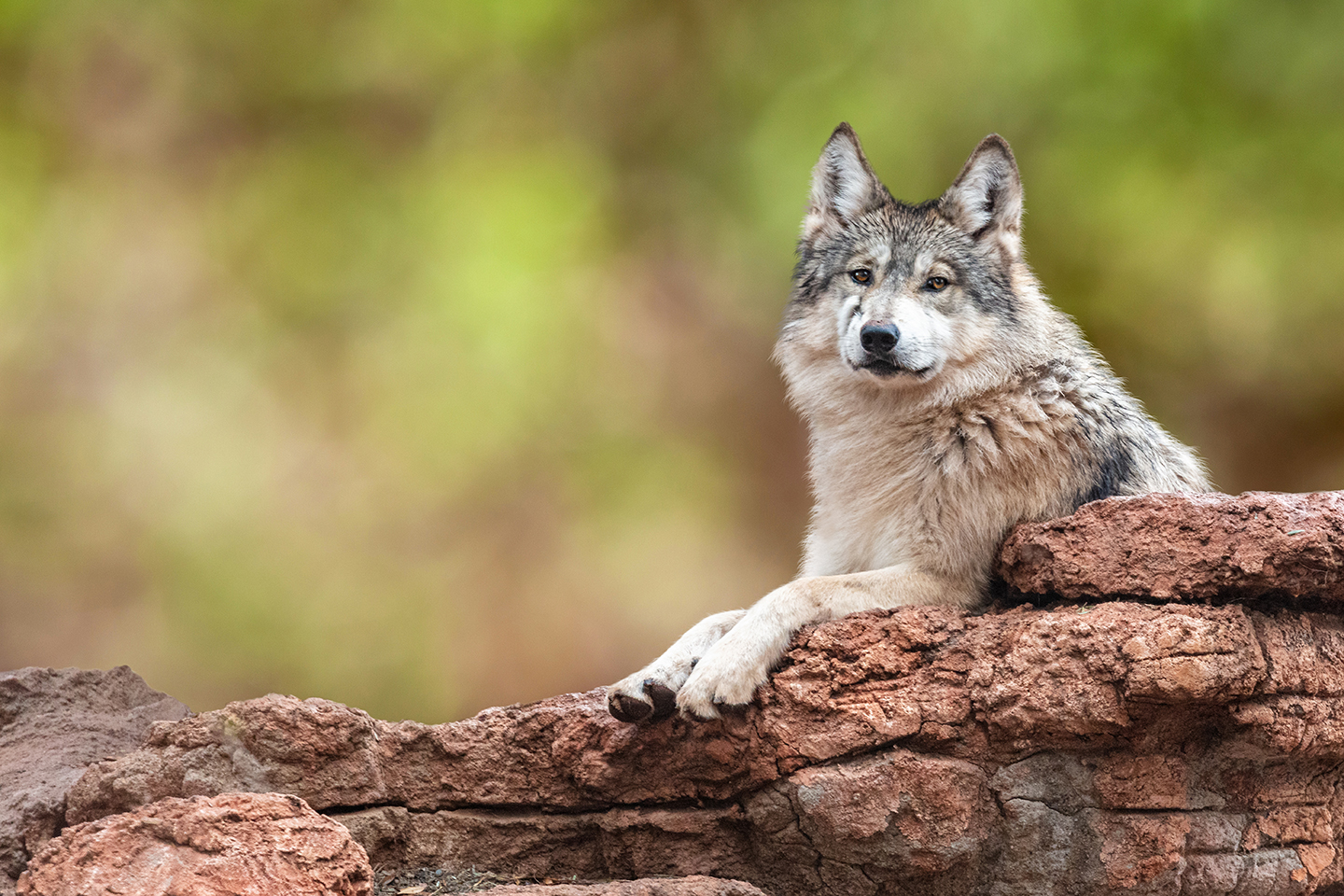 New tool can help predict species at risk of vulnerability or extinction - ASU Now