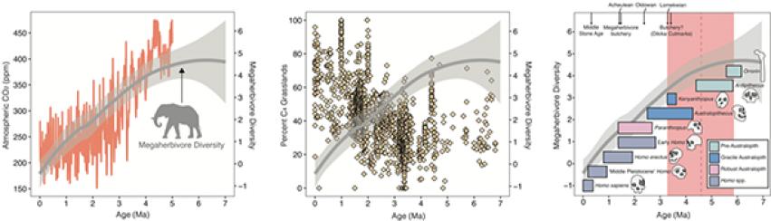 Megaherbivore graphs