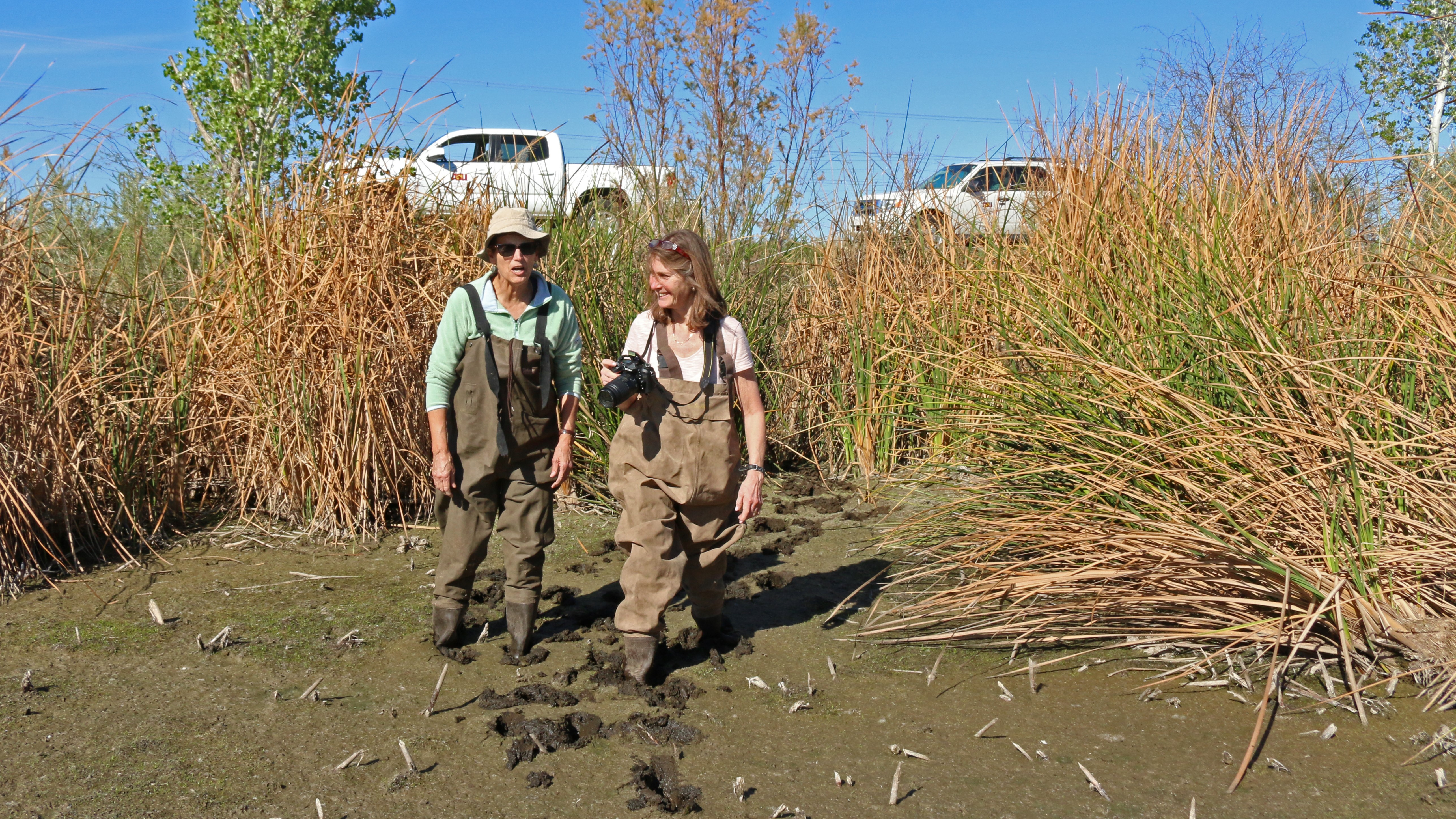 ASU\'s CAP LTER urban ecology program funded for another four years ...