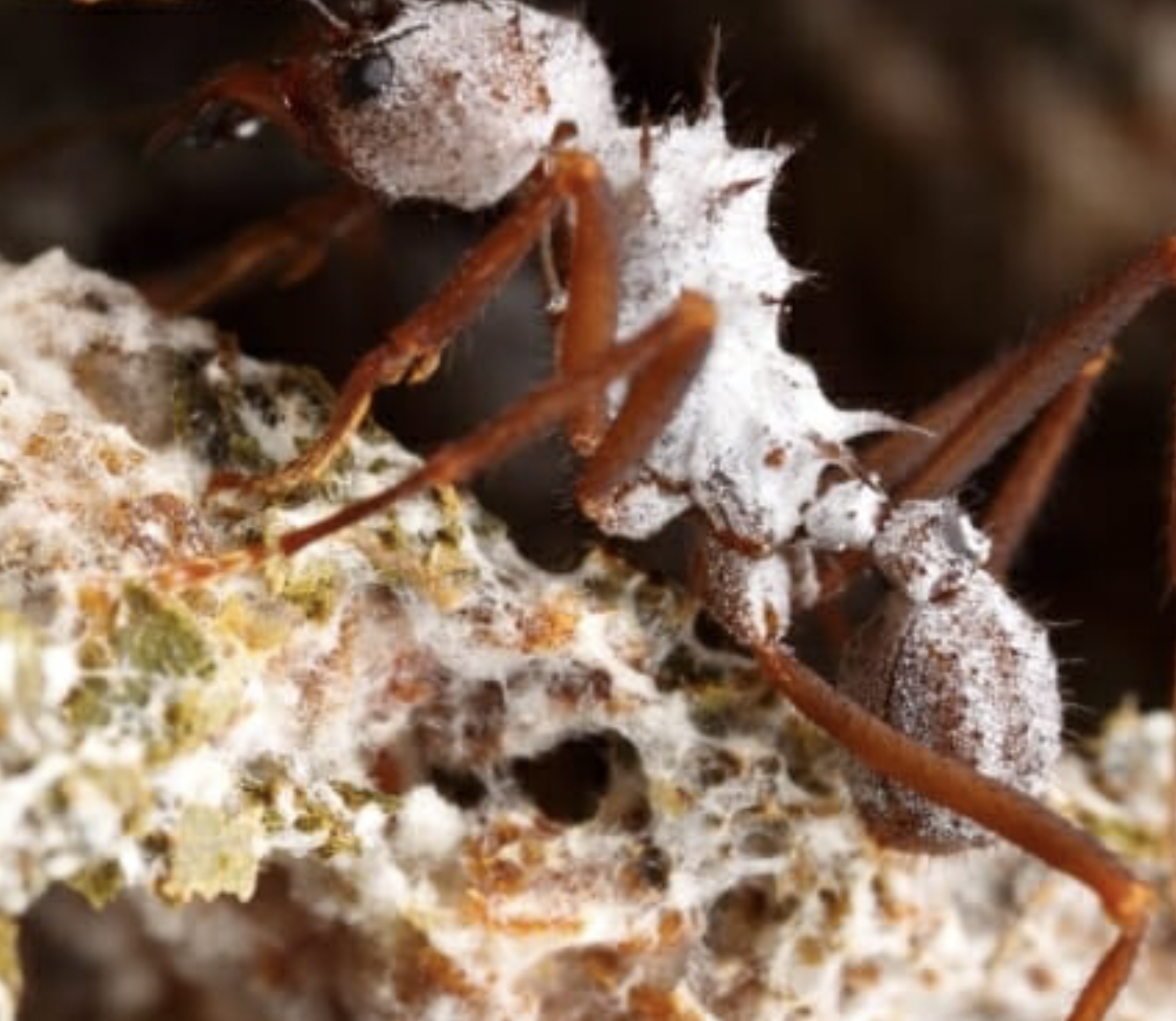Ants invented agriculture long before humans started watching \'ant ...