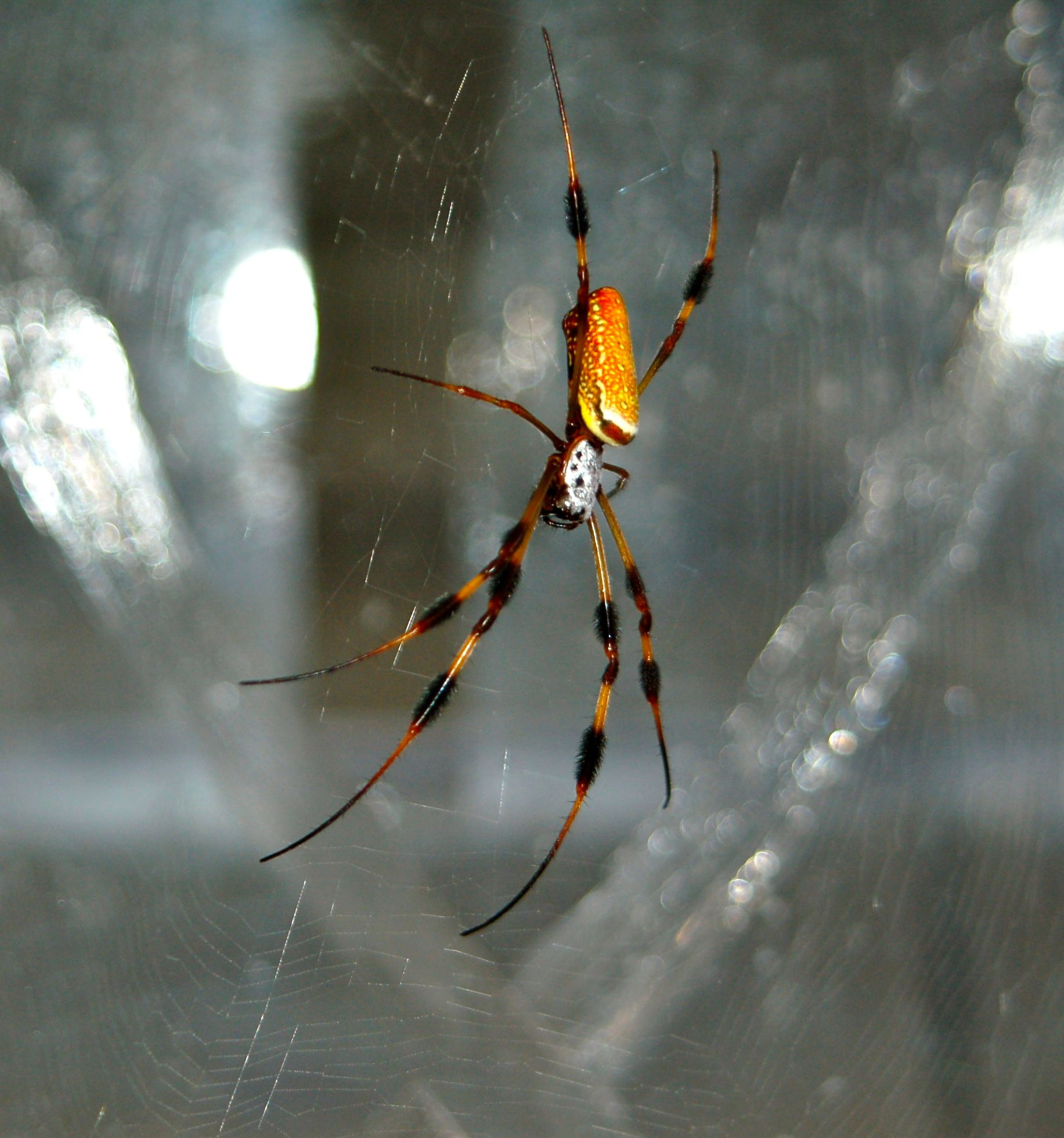 ASU scientists unravel the mysteries of spider silk | ASU Now ...
