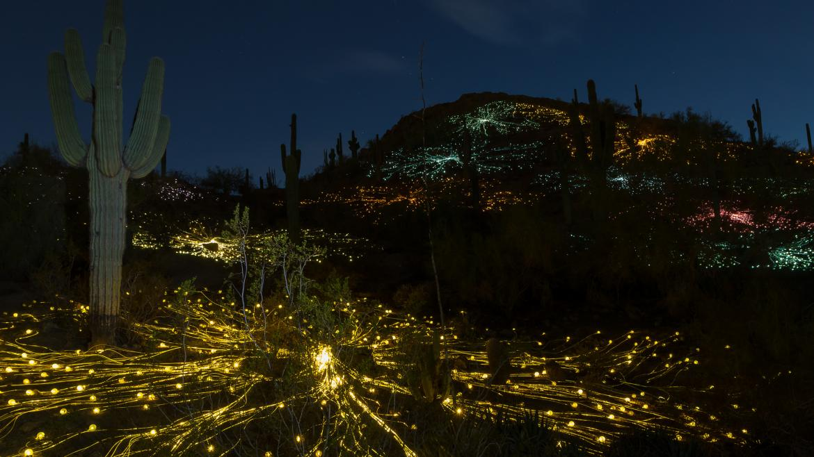 "A photograph of the art installation ""Fields of Light"" at the Desert Botanical Garden."