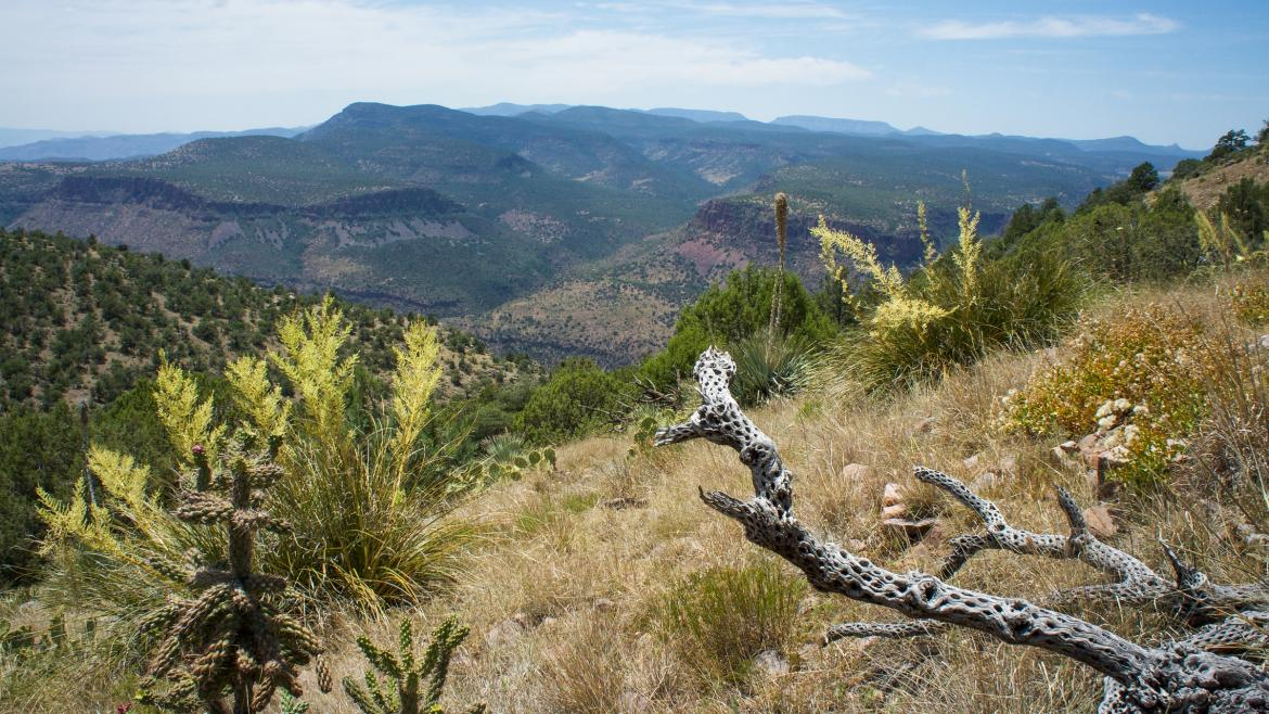 White Mountain Apache tribal land near where the meteorite strewn field was found.