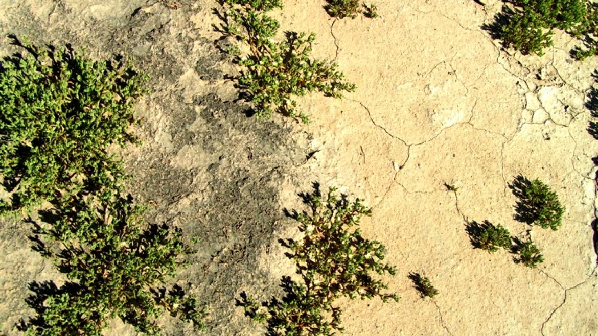 An aerial shot of the desert, with the soil on one side darker than the other.