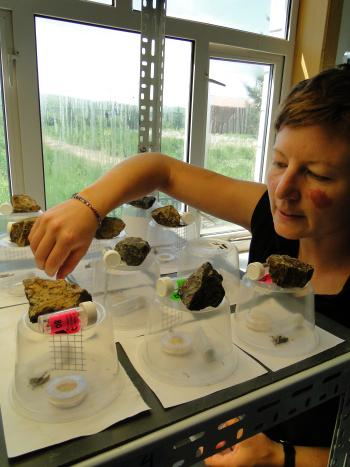 ASU doctoral student Arianne Cease checks her locust experiments.