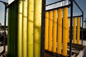 algae tubes