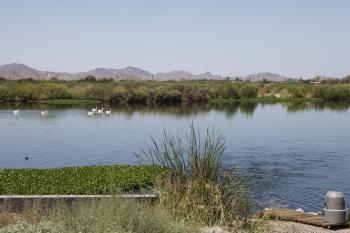 Image of urban wetland in Phoenix, AZ.