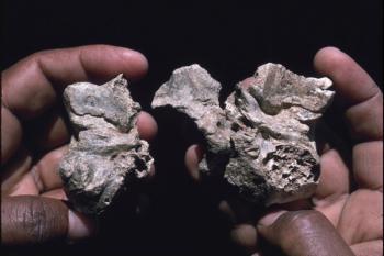 Ardipithecus ramidus bones