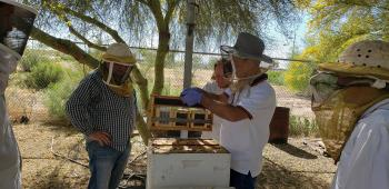 ASU continuing education beekeeping courses