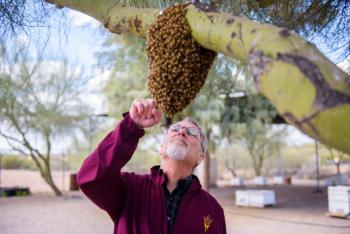 Robert E. Page Jr. founded the Honey Bee Research Facility at ASU's Polytechnic campus