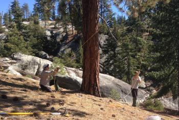 forest study fieldwork