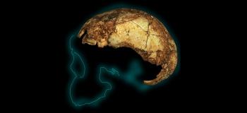 Homo erectus cranium