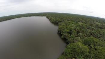 Aerial images of Amazonian peatlands in Peru