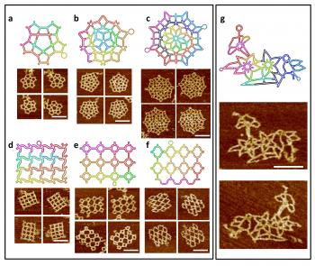 scaffold-folding paths for different DNA shapes