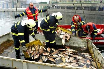 Authorities remove dead fish collected from the Tisa River in 2000