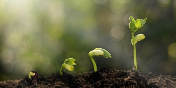 Image of a seedling growing at different phases