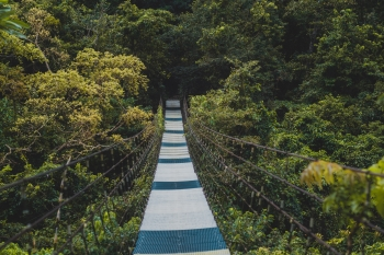 A suspended footbridge high up in the tree canopy.
