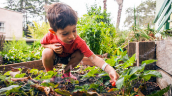 Stock Image - Young child in a garden bed