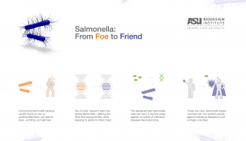 Salmonella vaccine infographic