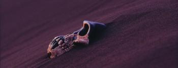 sand skull