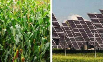 plants and solar cells
