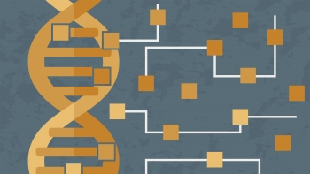 Synthetic gene circuit graphic