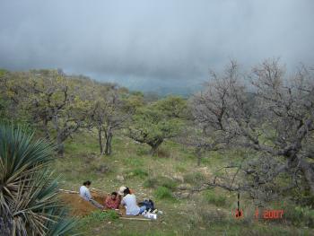 Sonoran rain