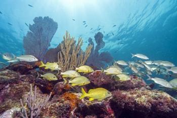 Coral reef in Florida Keys