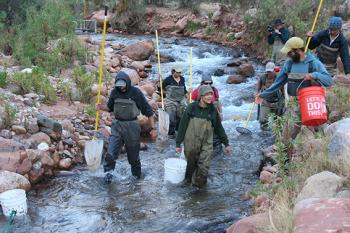Conservation biologists working in the Grand Canyon
