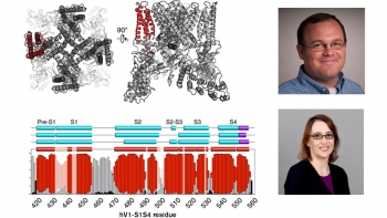 collage of photos that include two portraits of ASU professors, Wade Van Horn and Marcia Levitus, and an illustration of cellular biology