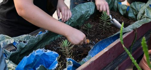 Hands planting succulents in a container