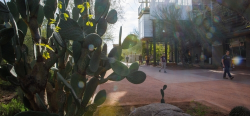 cacti and landscape at ASU Polytechnic campus