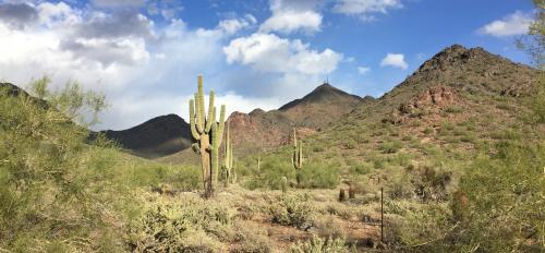 photo of Sonoran Desert taken by study participant