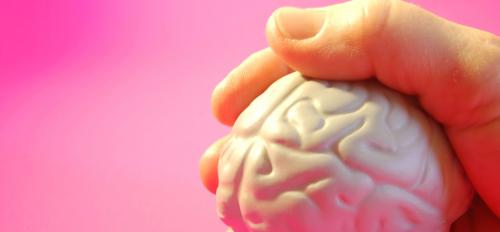 Brain model held in a hand