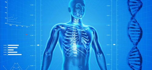 artistic rendering of a human body X-ray