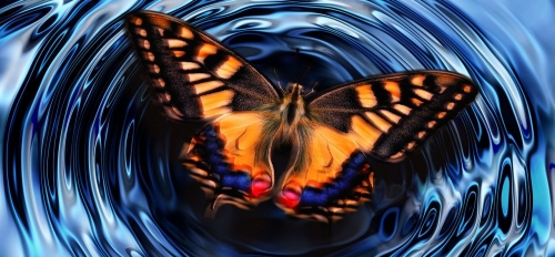 a computer illustration of a butterfly on a pond