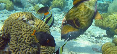Coral reef image from Pixabay