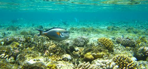 Coral reefs are eroded by microorganisms, among other stressors.