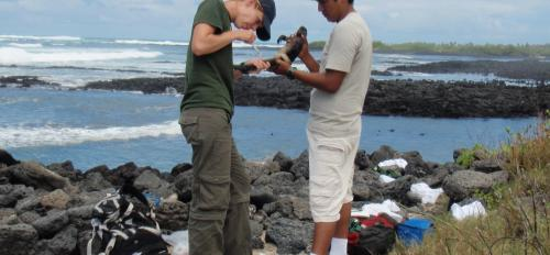 Susannah French studies how iguanas respond to environmental changes.