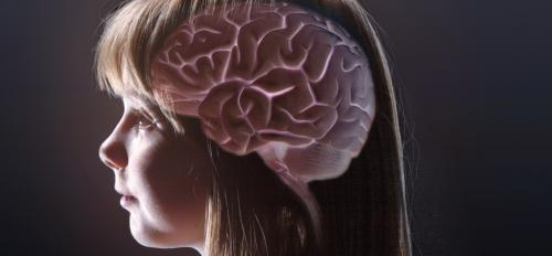 rendering of brain inside a girl