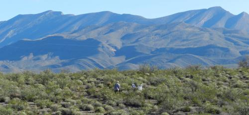 Field research, Chihuahuan Desert, New Mexico