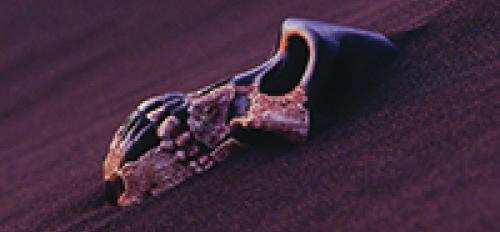 IHO skull image