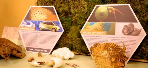 Biomimicry displays on table