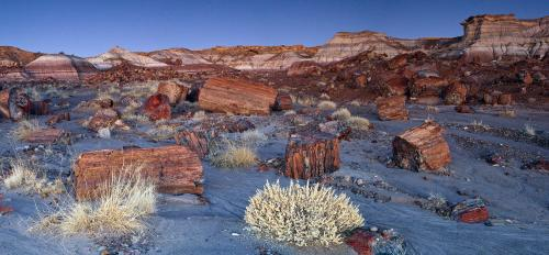 Jasper Forest at the Petrified Forest National Park