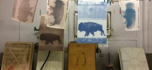 Cannupahanska Luger's test prints of a buffalo hang to dry