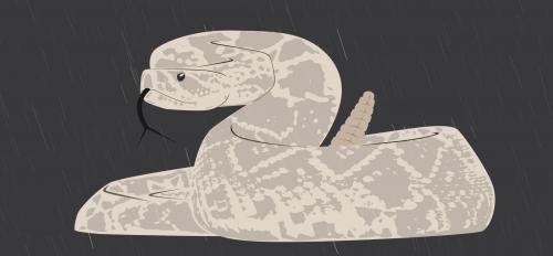 rattlesnake illustration